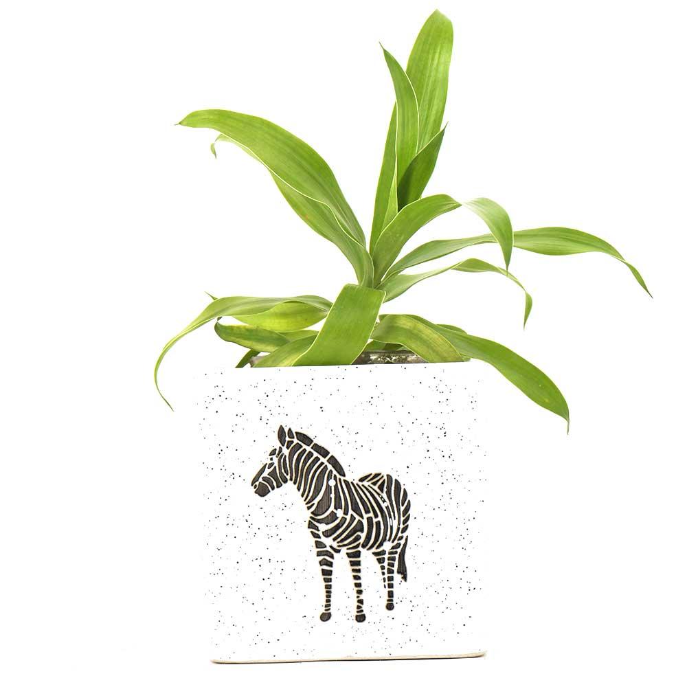 Ceramic Offwhite Zebra Bucket Planter